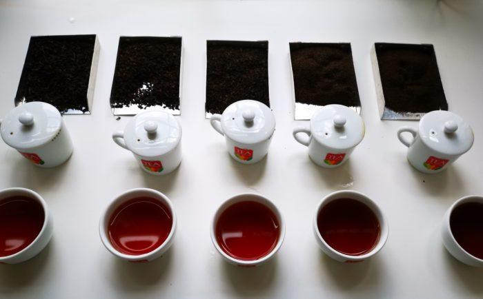 dégustation thés